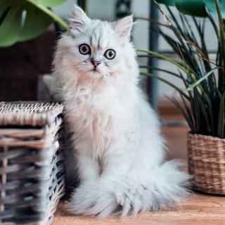 最高仅$3Petco 超便宜猫咪用品 凑单好物