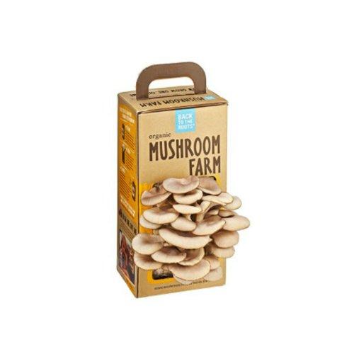 【好玩又好吃】神奇蘑菇盒