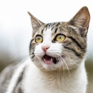 35% OffPetco Cat Litter on Sale