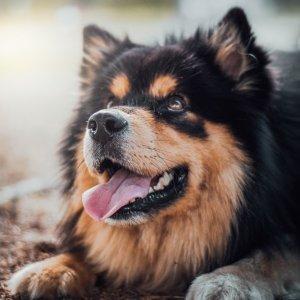 粉丝分享优质狗粮狗粮里的大学问 如何挑选最适合你家狗狗的狗粮