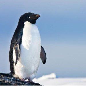 11天仅$7690 给你完美假期体验南极洲11天游轮观企鹅之旅 感受南极好风光