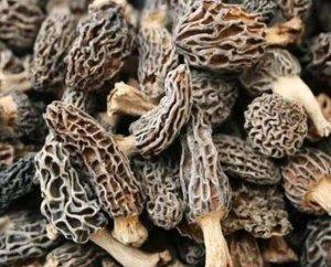 Grade B Wild Dried Morel Mushroom 2oz - GMP Vitas