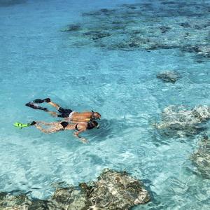 $439起  饮品/ WIFI免费7晚东加勒比 地中海海岸线号 9月迈阿密往返