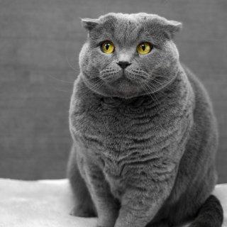 低至6折+额外8折Animaze 猫咪用品促销 $24.99入猫爬架