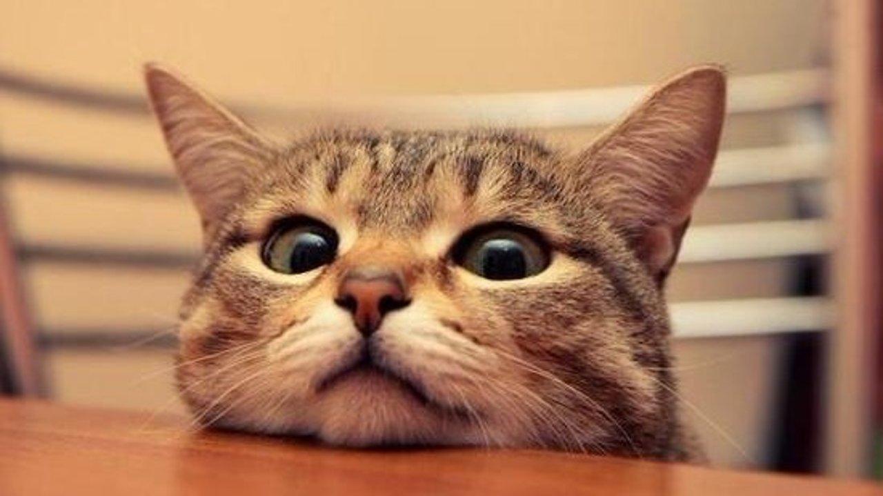 给主子买的猫粮总被退运?有哪些商品是容易被海淘禁运的?!