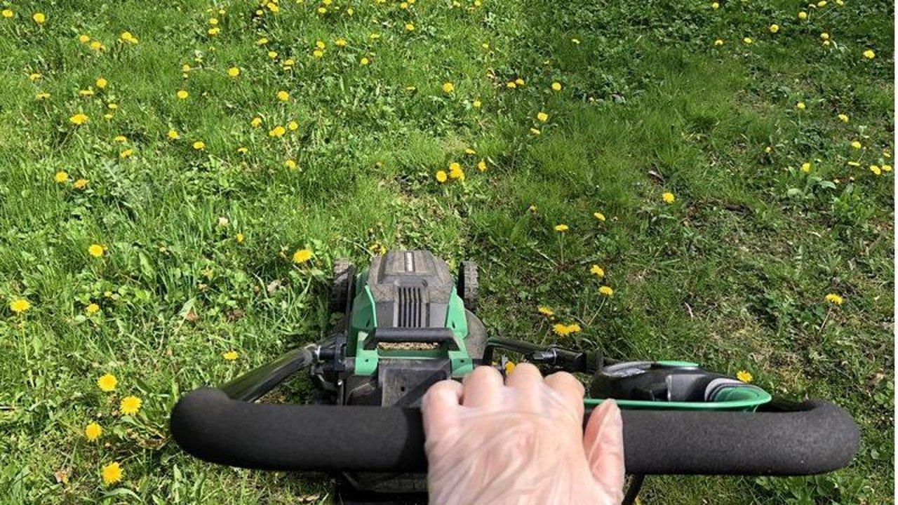 在加拿大第一次给院子除草