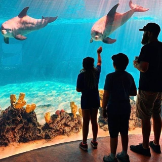 As Low As $41.99SeaWorld Single Day Ticket Limited Time Offer