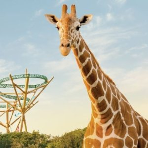 As low as $85BUSCH GARDENS TAMPA BAY TICKETS