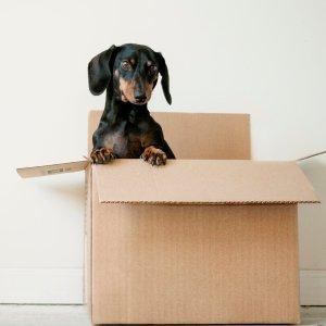 满$65立减$10Amazon 精选宠物用品大促销