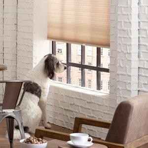 Up to 35% offSitewide Blowout @ Blinds.com