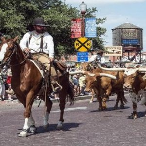 $809起 含酒店+交通+导游德州7日游 休斯敦牛仔节特别团 感受西部牛仔的生活
