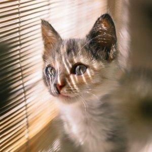 Under $3Cheap Cat Items @ Petco