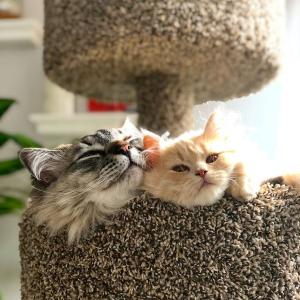 低至5折Petco 猫树热卖 猫主子的最爱