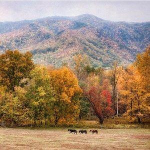 详解美东5大国家公园美国热门国家公园盘点 之 美东篇