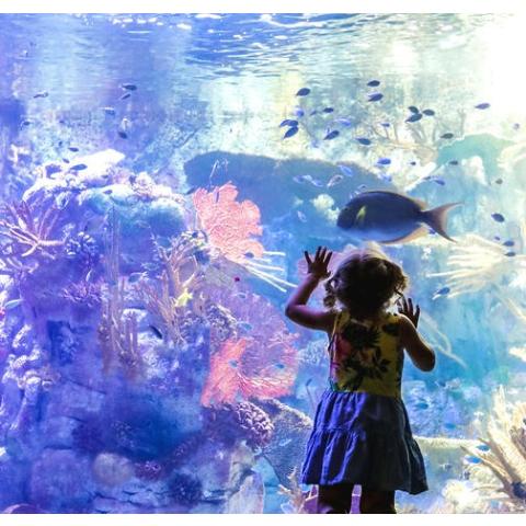 $5.5起  探索海底世界土澳日报12月新刊:吃喝玩乐样样俱全,本土折扣全攻略