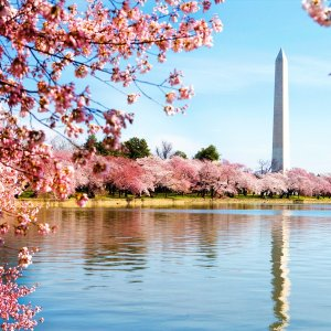 From $83Washington Hotel Deal @ Hotwire
