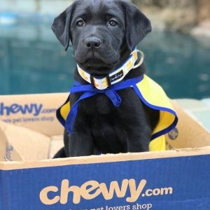 Up to 80% OffToday's Deal @ Chewy