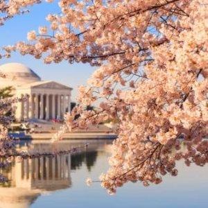 <赏樱季 · 费城华盛顿2日游>【纽约出发,费城+阿米什人村+华盛顿赏樱】