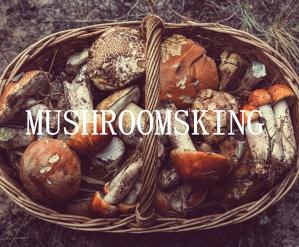 10%OFFMust Try Top Grade Premium Wild Dried Mushrooms@ Mushroomsking