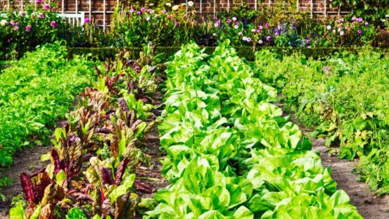如何选择适合种菜的花园土