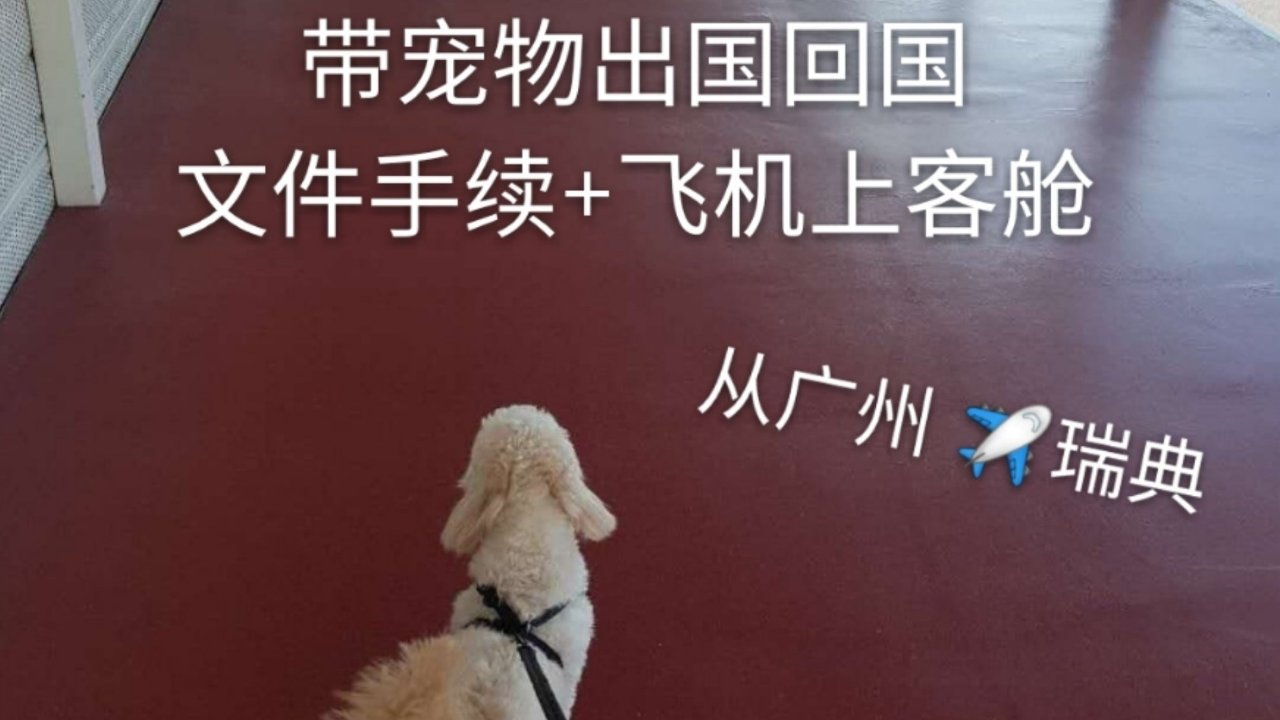 宠物出国回国 超详细手续+飞机上客舱经验