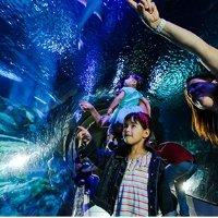 亚利桑那 探索中心+水族馆