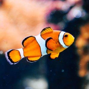低至8折Petco 高颜值宠物鱼促销