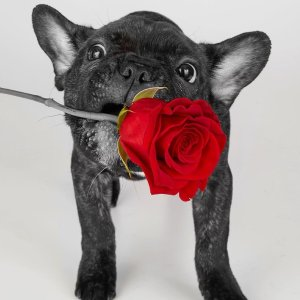Send Love Early & Save Up to 40% off flowers & gifts for Valentine's Day @ 1-800-Flowers