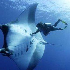 $85起 近距离接触魔鬼鱼夏威夷大岛科纳 夜间乘船+浮潜之旅