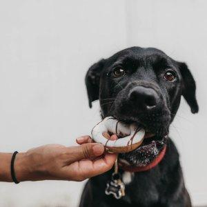 粉丝分享养狗经验10件狗家长必买好物 狗狗生活中必不可缺的用品