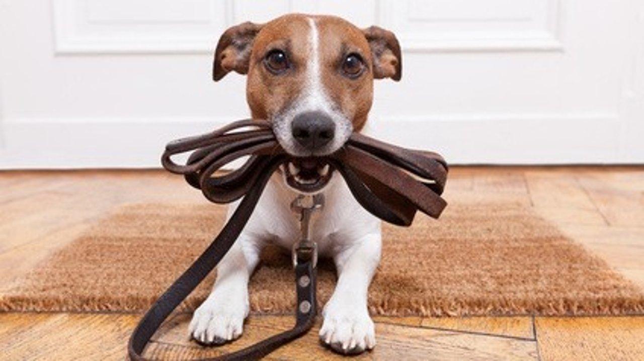 度假时如何安置家里的猫猫狗狗?| 短期旅游宠物照料指南、宠物照看所等