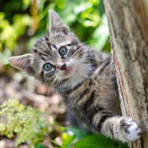 粉丝养猫经验分享如何为猫咪选一颗 物美价廉不踩雷的猫树