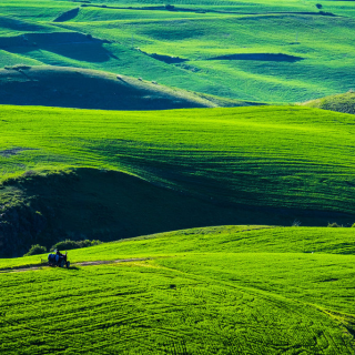 大麦若叶茶 || 一抹来自东方日本国的绿