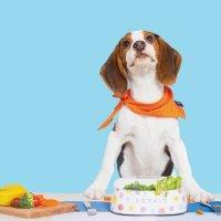 小佩PETKIT宠物智能称重碗 猫碗狗狗食盆 LA仓发出 【美国包邮】