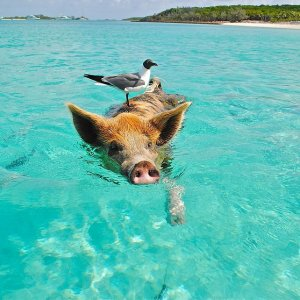 $169起 停靠私家岛屿 Ocean CayMSC游轮 巴哈马4天3晚游轮 迈阿密出发