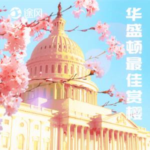 春假最Hot玩法,8.5折起华盛顿最佳赏樱期上线