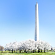 华盛顿纪念碑 | Washington Monument