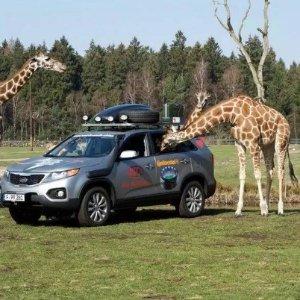 假装在非洲德国Serengeti Park野生动物园天票+四星酒店Michel Friends Hotel住宿2晚+早餐+晚餐 只要139欧!可以带2个10岁以下儿童