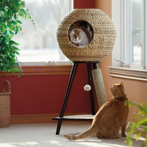 20% Off Pickup in StorePetco Pet Furniture on Sale