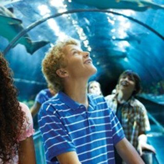 $59.99起(原价$91.99)加州圣地亚哥 SeaWorld 海洋世界工作日门票特价