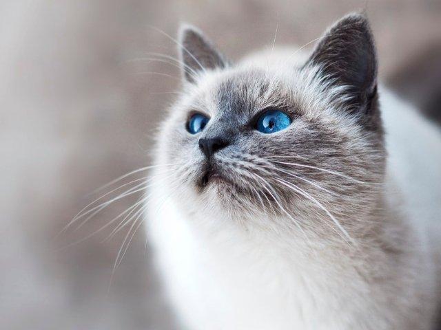 猫过敏和易过敏体质如何实现成为铲屎...