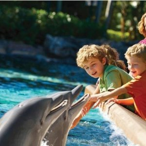 From $71.99Ticket to SeaWorld San Diego