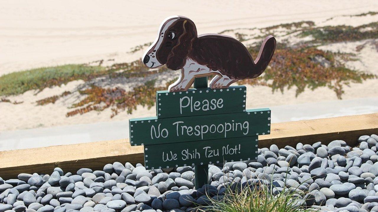 狗妈经验谈之狗狗拉稀怎么办
