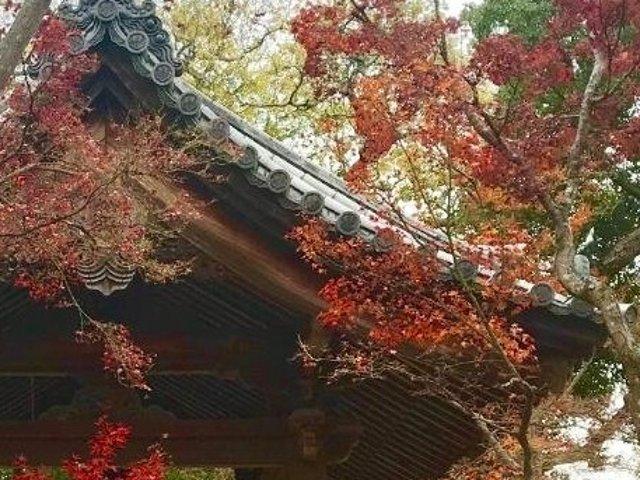 史上最全的超详细箱根红叶🍁温泉♨️...