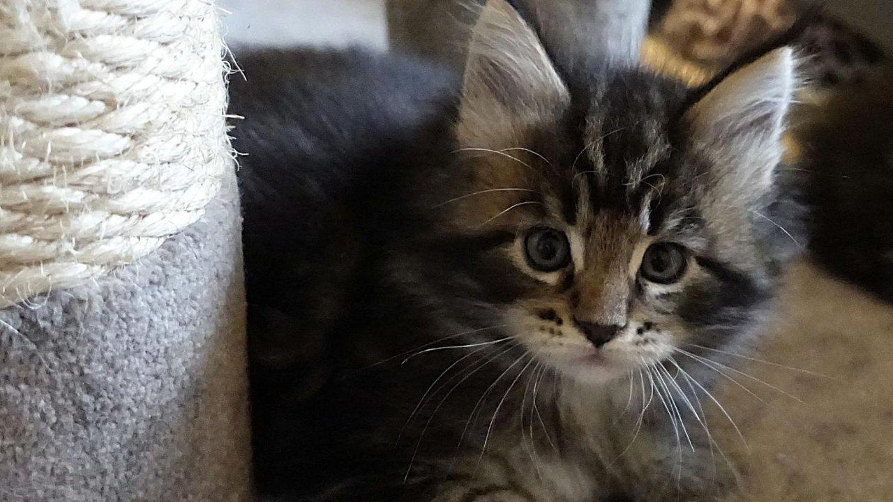 一个迎接猫猫的记录「01入猫篇」