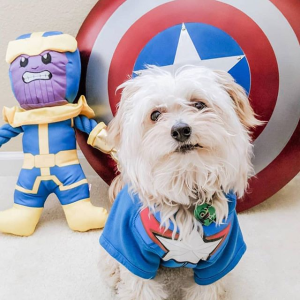 Buy 1 Get 1 50% OffPetco Marvel Pet Fan Collection