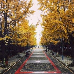From $320LA  - Chengdu China Sep - Oct Dates
