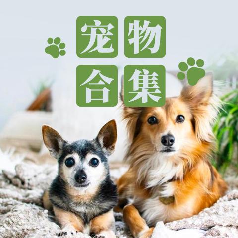 Renew DailyHot Pet Deals