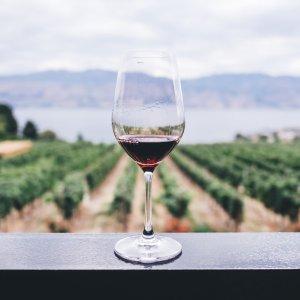 低至5折 每瓶仅€5.87起最美秋季葡萄酒精选 新用户订阅立减€10 内附介绍以及饮用建议
