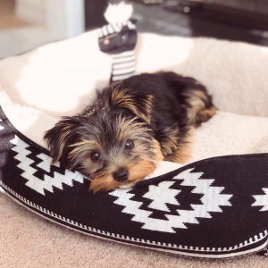 Up to 50% OffPetco Selected Dog Beds on Sale